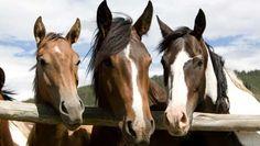 Home Ranch- Colorado Dude Ranch - Equitrekking