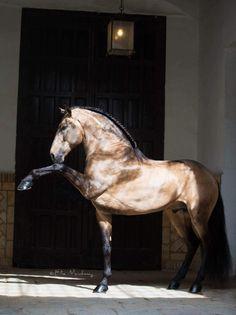Because... Spanish horses