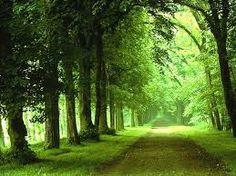 paisagem florestal - Pesquisa Google