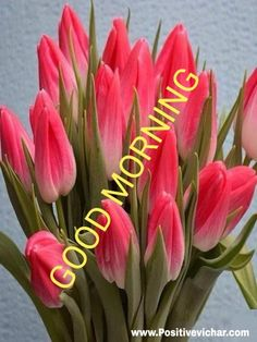 Beautiful Morning Pictures, Happy Sunday Images, Good Morning Beautiful Gif, Good Morning Flowers Pictures, Good Morning Coffee Gif, Good Night Flowers, Good Morning Nature, Beautiful Morning Messages, Good Morning Cards