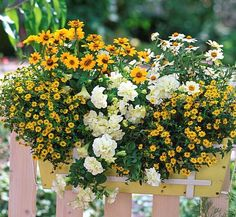 Daisies. White & yellow.