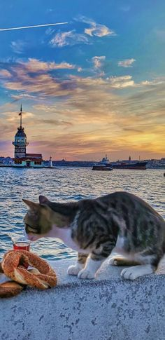 Travel Around The World, Around The Worlds, Istanbul City, Antalya, Wonderful Places, Cats And Kittens, Kitty, Cities, Backgrounds
