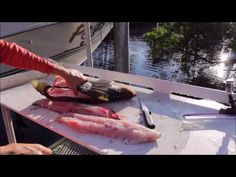 How To: Best Recipes For Cooking Triple Tail On The Web ... Are Saltwater Sheepshead Fish Good To Eat