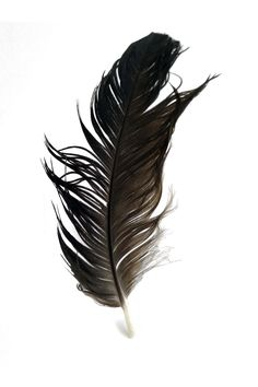 perfectly imperfect black feather   STILL (mary jo hoffman)