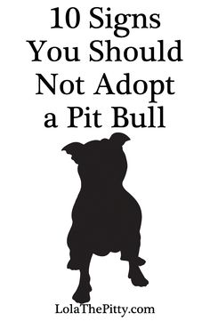 10 Signs You Should Not Adopt a Pit Bull - MUST READ before judging the title :) | Via LolaThePitty.com