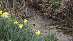 Spring has arrived at #LaJunnel
