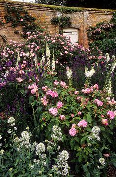 Mottisfont Abbey Rose Gardens, Hampshire, England