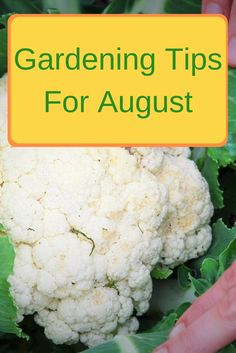 Is your garden overwhelming you this month? Here are a few gardening tips for August to help you get the most you can with the least effort