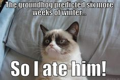 Image result for groundhog day jokes