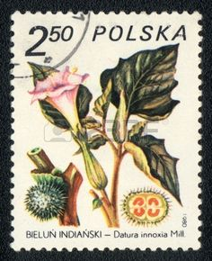 Datura innoxia, herb series,stamp printed in Poland, circa 1980