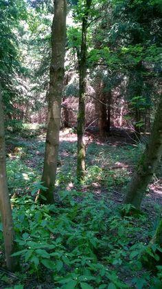 Fairytale like forest in Bavaria #fairytale #Germany #beautiful