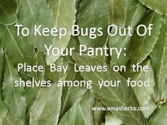 Keep bugs out of your pantry with bay leaves