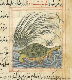 Bestiary, Tortoise swimming in water; reeds on shore- The Morgan Library & Museum