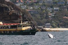 "There was a whale in the harbour this morning""...  perfectly legit excuse to be late for work."
