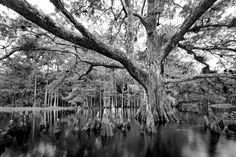 Beautiful Everglades Photos