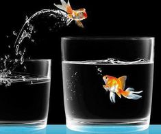 Goldfish jumping out if glass into a glass with another goldfish Double Exposition, Les Gifs, Gif Animé, Animated Gif, Love Wallpaper, Iphone Wallpaper, Pet Birds, Color Splash, Shot Glass