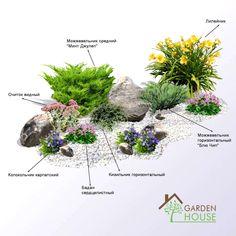 Front Garden Landscape, Small Front Yard Landscaping, Hillside Landscaping, Lawn And Garden, Flower Garden Plans, Flower Garden Design, Easy House Plants, Evergreen Garden, Small Vegetable Gardens
