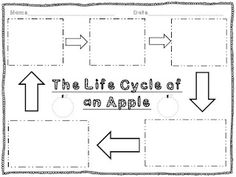 FREEBIE graphic organizers for pumpkin & apple life cycles