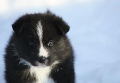 30 Incredibly Rare And Exotic Dog Breeds That You Need In Your Life