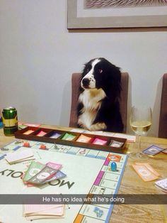How I feel playing monopoly Won't take you long to learn, buddy. You're a Border Collie! Cute Animal Pictures, Dog Pictures, Funny Pictures, Random Pictures, Dog Photos, Animal Memes, Funny Animals, Cute Animals, Perros Border Collie