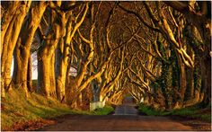 This beautiful avenue ,Northern Ireland.