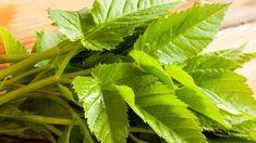 Bršlice kozí noha (Aegopodium podagraria) je pro zahrádkáře zákeřný plevel, který se snad ani nedá vymýtit, ale z pohledu bylinkářů je to nepříliš známá, ale o to účinnější léčivá bylina. Gardening Tips, Herbalism, Diabetes, Diy And Crafts, Plant Leaves, Health Fitness, Herbs, Plants, Compost