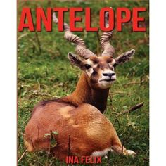Antelope: Children Book of Fun Facts & Amazing Photos on Animals in Nature - A Wonderful Antelope Book for Kids Aged 3-7