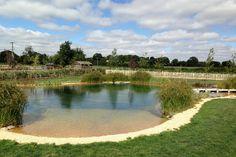 Natural Swimming Pond Designs from Gartenart