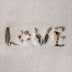 Andrea Haase - shells love