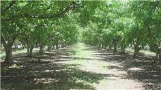 Video: When to Spray Fruit Trees