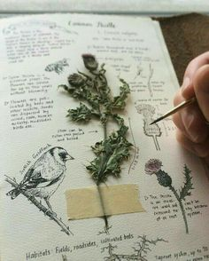 – DIY How do I make a herbarium? – DIY – – Comment faire un herbier? – DIY side herbarium with plant Kunstjournal Inspiration, Art Journal Inspiration, Journal Ideas, Journal Art, Sketch Journal, Journal Design, Memory Journal, Drawing Journal, Watercolor Journal