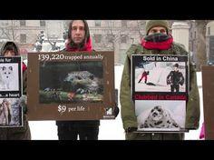 Montreal animal activists celebrate National Anti-Fur Day 2014 - Montreal Animal Advocacy | Examiner.com