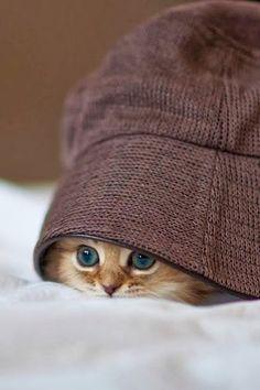http://wwwblogtche-auri.blogspot.com.br/2013/11/so-os-gatinhos-mais-lindos-da-internet.html blogAuriMartini: Só os gatinhos mais lindos da internet