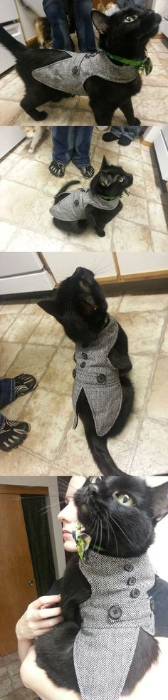 nice oh my god, I'm not normally a fan of clothes on cats, but this is so stinkin ado...