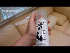 Ragdoll Cats and QuitIt Pet Noise Maker - ねこ - ラグドール - Floppycats http://youtu.be/nTORoJziOow