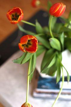 Spring Tulips via @m