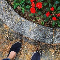 All you need is a pair of espadrilles and flowers, lots of flowers / Todo lo que necesitas es un par de alpargatas y flores, muchas flores 🌹 #naturalworldeco #naturalpeople #espadrilles  #ecofriendly #summertime @flashstorerho