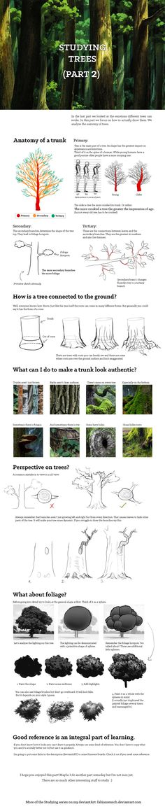 Studying: Trees (pt.2) by fabianrensch.deviantart.com on @DeviantArt