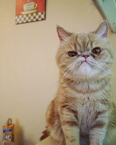 This cat is my spirit animal.