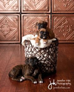 puppies in wastebasket :)