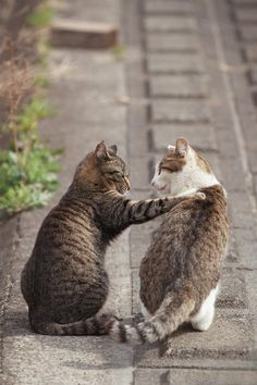 Mostly Cats. Mostly. - llbwwb: Hey! Let's go drinking! Photo by Seiji...