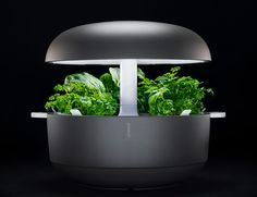 Hydroponic Gardening Reap the benefits of better dinners and brighter cocktails year-round with low-effort, indoor gardening kits from Plantui and Click Aquaponics Kit, Hydroponic Gardening, Indoor Gardening, Kitchen Gardening, Hydroponics System, Diy Hydroponik, Smart Garden, Plant Lighting, Paludarium