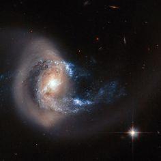NGC7714 se recompone tras chocar con otra galaxia. Millones de soles huyen. Nuevas estrellas nacen... Muy Grande.