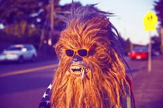 Gang de Wookies : Chewbacca et sa famille dans la vraie vie. Chewbacca, Diary Of A Madman, Thats All Folks, Surreal Photos, Star Wars, Photoshop, Life Pictures, Funny Pictures, Looks Vintage