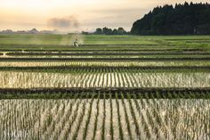 Lavori agricoli dalla mattina