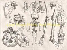 latest addition Anatomy – Ame Bourdon 1678e