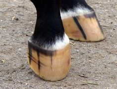 Learn about healthy hoof conformation and common, potentially function-affecting abnormalities.