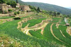Les Cévennes et son oignon doux détiennent le label : Site Remarquable du Goût Le Gard, Pont Du Gard, France, Golf Courses, Vineyard, Outdoor, Camargue, Tourism, Vacation
