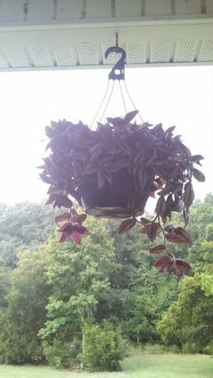 Hanging basket from front porch
