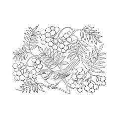 Vector of 'Art rowan tree isolated over white'